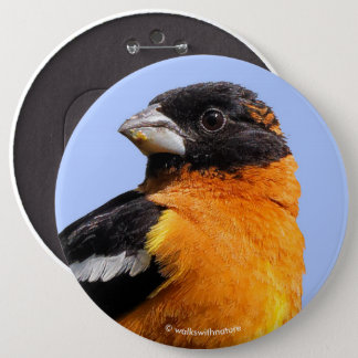 Schöner schwarzköpfiger Grosbeak in einem Baum Runder Button 15,3 Cm