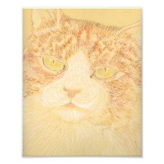 Schöner Tabby-Katzen-Kunst-Druck Photographie