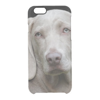 Schöner Weimaraner Jagd-Hund Durchsichtige iPhone 6/6S Hülle