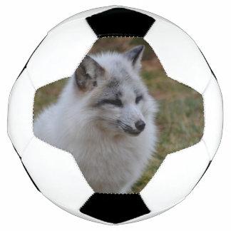 Schöner weißer schneller Fox Fußball