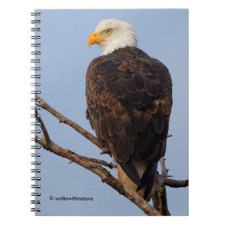 Schöner Weißkopfseeadler in einem Baum Notizblock