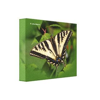Schöner Western-Tiger-Frack-Schmetterling Leinwanddruck