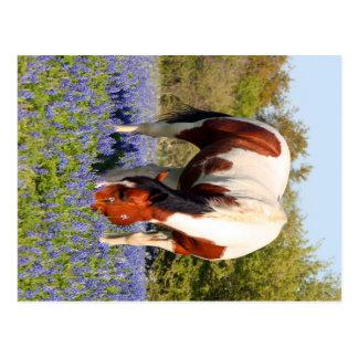Schönes Farben-Pferd auf einem Gebiet der blauen Postkarte