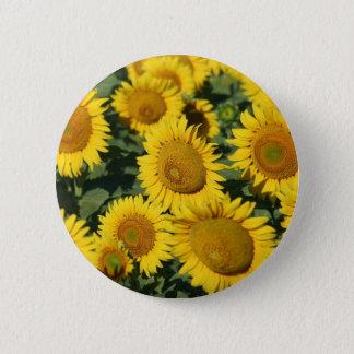 Schönes Feld der Sonnenblumen Runder Button 5,7 Cm