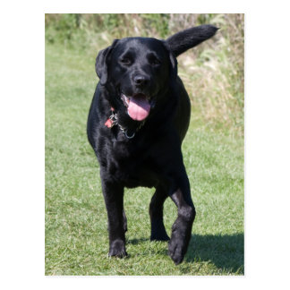 Schönes Foto Labrador-Retrievers schwarzer Hunde Postkarten