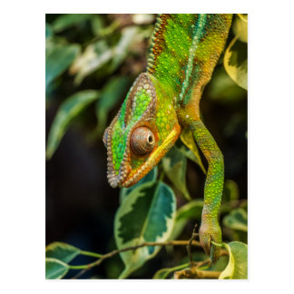 Schönes grünes Chamäleon Postkarte