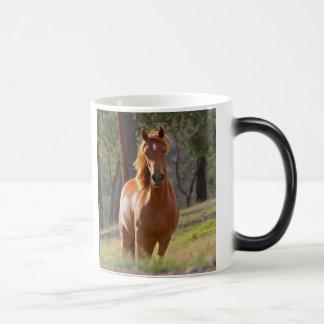 Schönes KastanienpferdeFotoporträt, Geschenk Verwandlungstasse