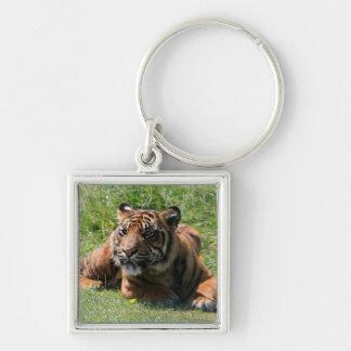 Schönes keychain Porträt des Tigerjungen, Schlüsselanhänger