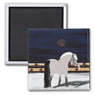 Schönes norwegisches Fjord-Pferd Quadratischer Magnet