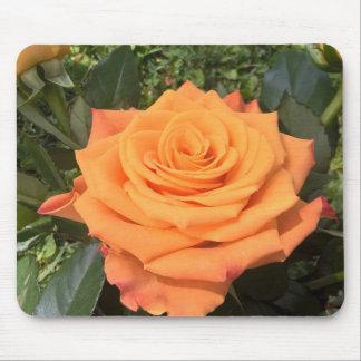 Schönes orange Rosen-Foto mousepad