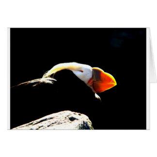 Schönes Papageientaucher-Profil Karte