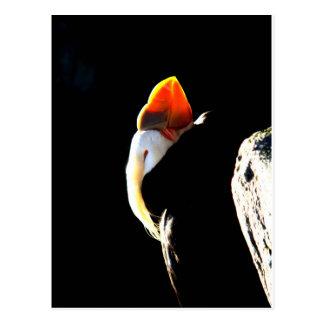 Schönes Papageientaucher-Profil Postkarte