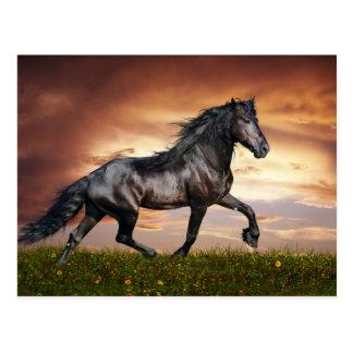 Schönes Pferd Postkarte