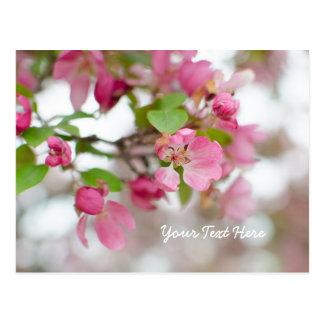 Schönes rosa Holzapfel blühen Postkarte