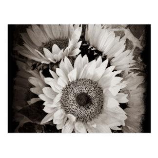 Schönes Sonnenblume-Blumenstrauß-Foto in Schwarzem Postkarten