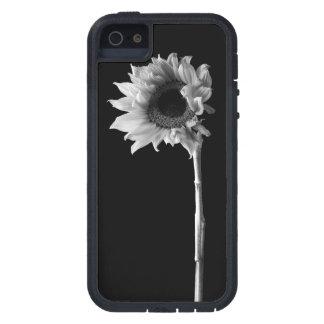 Schönes Sonnenblume-Porträt in Schwarzweiss iPhone 5 Hülle