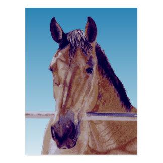 Schönes Western-Pferd Postkarte