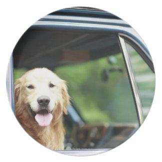 Schoßhund, der in einem Auto sitzt Teller