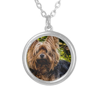 Schoßhund Yorkshires Terrier Versilberte Kette