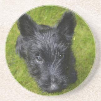 Schottisch-Terrier-Welpe Getränkeuntersetzer