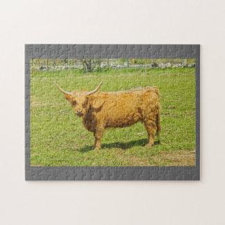 Schottische Hochland-Kuh auf dem Bauernhof-Gebiet Puzzle