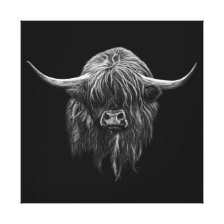 Schottische Hochland-Kuh Gespannte Galerie Drucke