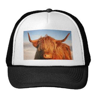 Schottische Hochland-Kuh - Schottland Retrokappe
