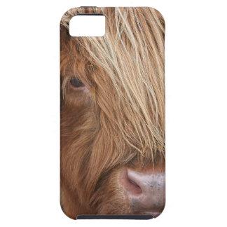 Schottische Hochland-Kühe - Schottland Etui Fürs iPhone 5