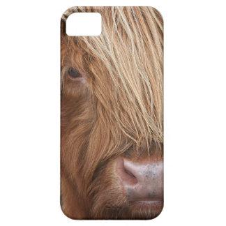 Schottische Hochland-Kühe - Schottland iPhone 5 Hüllen
