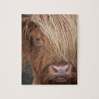 Schottische Hochland-Kühe - Schottland Puzzle