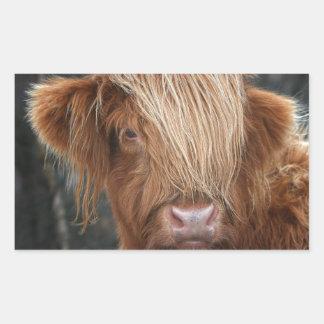 Schottische Hochland-Kühe - Schottland Rechteckiger Aufkleber