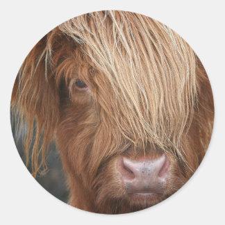 Schottische Hochland-Kühe - Schottland Runder Aufkleber
