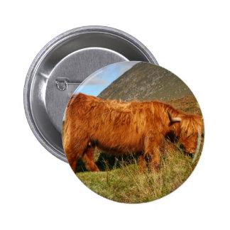 Schottische Hochland-Kühe - Schottland Runder Button 5,1 Cm
