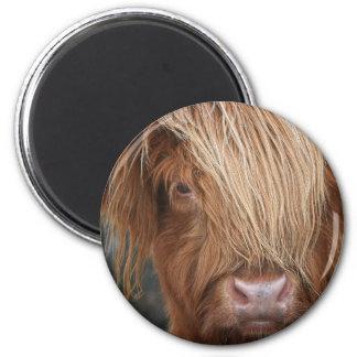 Schottische Hochland-Kühe - Schottland Runder Magnet 5,7 Cm