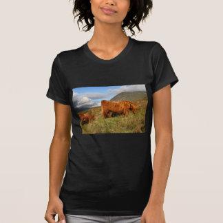 Schottische Hochland-Kühe - Schottland T-Shirt