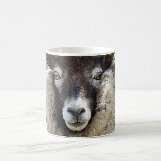 Schottische Schafe Kaffeetasse