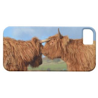 Schottisches Hochland-Vieh iPhone 5 Etui