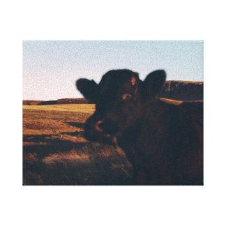 schottisches Kuhporträt Leinwanddruck