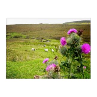 Schottland-Hochland-Distel-Landschaftsacryl-Platte Acryldruck