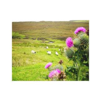 Schottland-Hochland-Distel-LandschaftsLeinwand Leinwanddruck