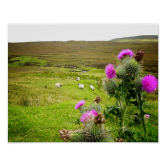 Schottland-Hochland-Distel-Landschaftsplakat Poster