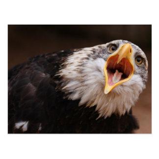 Schreiende Eagle-Postkarte Postkarten