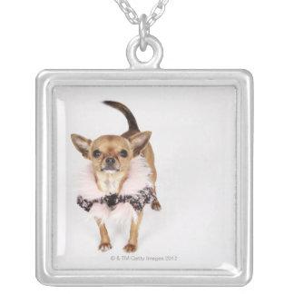 Schrulliges Porträt Teacup-Chihuahua Versilberte Kette