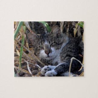 Schüchterne Jungen-Katze, die Puzzlespiel aufwacht Puzzle