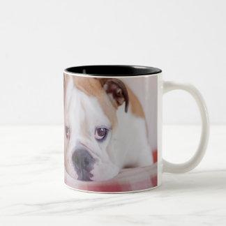 Schüchterner englischer Bulldoggen-Welpe Zweifarbige Tasse