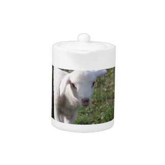 Schüchternes Lamm