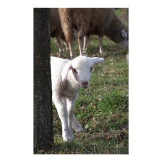 Schüchternes Lamm Briefpapier