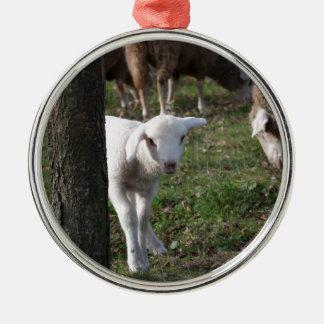 Schüchternes Lamm Rundes Silberfarbenes Ornament