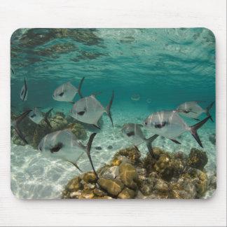Schule der Erlaubnis-Fische Mauspad