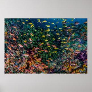 Schulen des Fisch-Schwimmens im Riff Poster